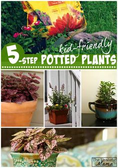 Kid Friendly Potted Plants with Step-by-Step Instructions