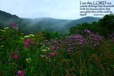 Isaiah 44:24