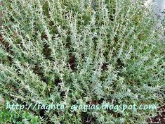 Food Network Recipes, Gardening Tips, Natural Remedies, Herbalism, Herbs, Nature, Plants, Decor, Natural Home Remedies