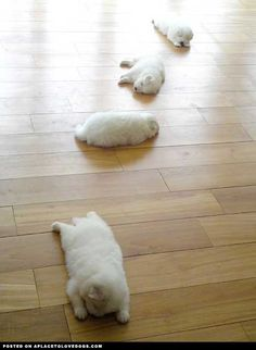 A Trail Of Puppies HEHE