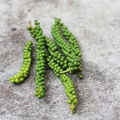Fresh green peppercorns. After harvesting they are boiled and dried to become the black peppercorns we know.