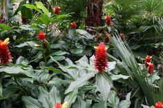 Tottie's Blooms: Tropical Gardens at Australia Zoo