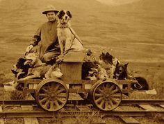 """Even sled dogs get a vacation from mushing in the winter. Yet this gentleman  gave his dogs a treat when he coasted on a """"Dogmobile Trip"""" from  Shelton to Nome, Alaska; a photographer captured the rail cart journey  on July 28, 1912."""
