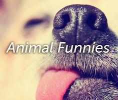 Animal Funnies Funny Animal Photos, Funny Animals, Animal Funnies, Funny Pictures Of Animals, Animal Humor, Animal Jokes, Funny Animal, Hilarious Animals, Funny Animal Comics