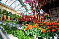 Conservatory at Bellagio
