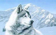 Lobo no pé de montanha de neve