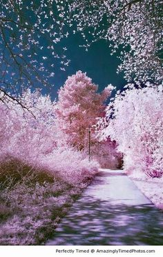 Cherry Blossom, Sakura, Japan. Source: http://amazinglytimedphotos.com/