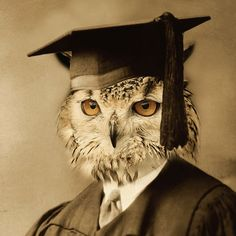 Owl Portrait - Anthropomorphic Digital vintage Sepia color recolored Altered photo Printable image Download postcard and A4 size //vp040