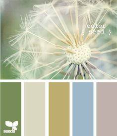 color seed... these are the colors I used in all of the public rooms of my house (ie the dining room, front room, foyer, kitchen, and living room)
