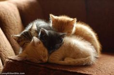 Pile of tiny kitty heads.