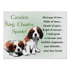 Cavalier King Charles Spaniel Gifts Poster
