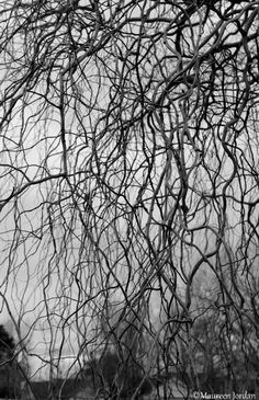 Beautiful twisty branches