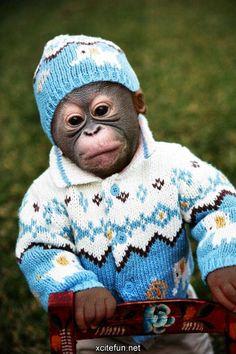 Baby monkey all bundle up!
