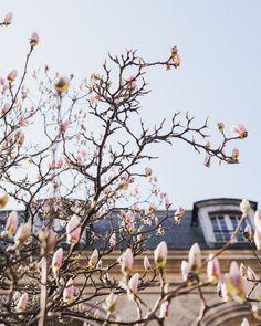 springtime in Paris.