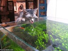 Just A Little Sip - funnycatsite.com#cats #funny #cute