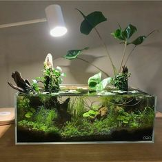 49 Small Garden Aquarium Ideas To Beautify Your Green World My ever experiment with low tech aquascaping from last summer is starting to look a little overgrown. Time for a spring overhaul! Aquarium Design, Nano Aquarium, Nature Aquarium, Planted Aquarium, Aquarium Garden, Aquascaping, Fake Plants, Indoor Plants, Bonsai