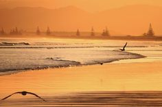 Manutuke, Gisborne Region, New Zealand- The orange fog Photo by Emanuele Del Bufalo -
