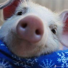 my pig!!!!!