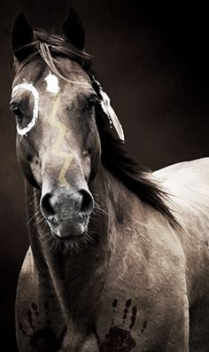 Native American symbols painted onto this horse. Each has a meaning. Every time…