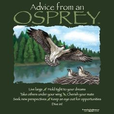Advice From An Osprey Animal Spirit Guides, Spirit Animal, Earth Sun And Moon, Sun Moon, Quirky T Shirts, Animal Meanings, New Perspective, Cute Cards, Cute Quotes