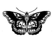 harry styles butterfly tattoo - Google Search