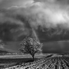 An Almond Tree Under the Storm