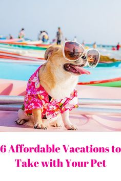 6 Affordable Vacations to Take with Your Pet. Summer is here, and it's an excellent opportunity to begin filling your timetable with fun trips! Laying On The Beach, Bureau Of Land Management, Affordable Vacations, Summer Is Here, Paddle Boarding, Large Dogs, Your Pet, Pup, Tourism