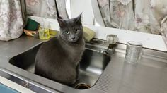 """Yes, I'm sitting in the sink! So? WHERE do you sit? On a chair?!"""