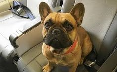 Image result for animated posters for pet friendly traveling