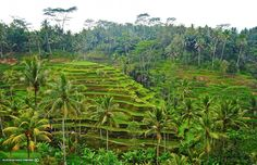 hanging gardens ubud bali indonesia destination weddings and honeymoon #GOWSRedesign