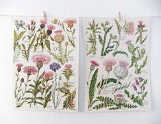 vintage botanical flowers - Google Search