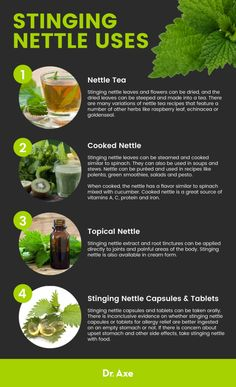 It's Not Just a Prickly Plant: Stinging Nettle Benefits - Miranda Gapper Nettle Tea Benefits, Health Benefits, Health Tips, Health Recipes, Gut Health, Healing Herbs, Medicinal Herbs, Natural Health Remedies, Herbal Remedies