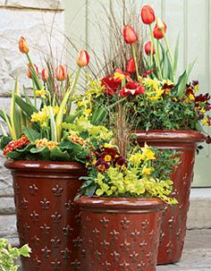 **Triple-decker** Wispy leatherleaf sedges add height and last through winter in this trio of bold containers. Vivid orange tulips, red- and gold-kissed primroses and hints of brown in the violas accentuate the burnt red pots. Yellow daffodils and creeping Jenny tie all three together. Lily bulbs planted eight inches deep will emerge in June for gorgeous summer bouquets. **SUMMER UPDATE** Replace the tulips and primroses (plant them in your garden) with begonias and ivy.
