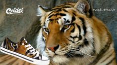 Bengal Tiger Animal desktop wallpaper, Tiger wallpaper - Animals no. Bengalischer Tiger, Bengal Tiger, Tiger Wallpaper, Animal Wallpaper, Hd Wallpaper, Running In Snow, Tiger Sketch, Cheetah Face, Tiger Pictures
