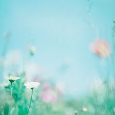 Field Of Dreams, Frame Background, Cute Profile Pictures, Wallpaper Backgrounds, Wallpapers, Pastel Colors, Color Inspiration, Scrapbook Paper, Color Schemes