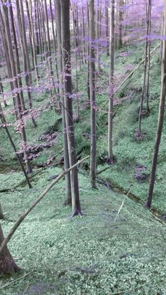 Forest, I like mushrooms