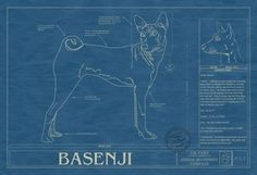Page not found - Animal Blueprint Company Basenji Puppy, Foster Baby, Blueprint Art, Cool Pets, Awesome Dogs, Pet Gear, Dogs And Puppies, Doggies, Wild Ones