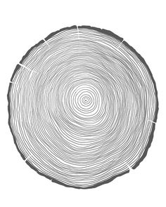 tree rings.  spent some time snoozing by the fire over Thanksgiving.