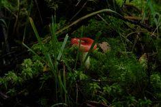 The stunning west coast of Scotland. #westisbest #portappin #argyll #Scotland #fungi #trees #Moss #nature #NaturePhotography #naturelovers West Coast Scotland, Space Wedding, Scottish Highlands, Fungi, Glamping, Nature Photography, Trees, Mushrooms, Go Glamping