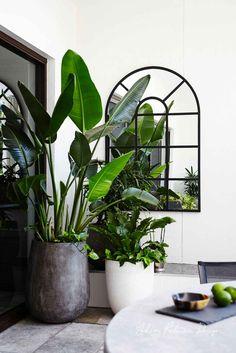 Modern Flower Pots Ideas For Indoor Use 03 Indoor Tree Plants, Balcony Plants, Balcony Garden, Trees To Plant, Potted Plants, Balcony Ideas, Garden Spaces, Interior Design Plants, Patio Interior