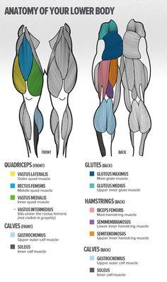 Lower Body Anatomy