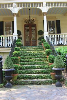 Front Door Steps, Porch Steps, Front Entry, Front Doors, Front Porch, Porch Plants, Ivy Plants, Amazing Greens, Front Yard Landscaping