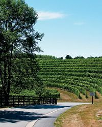 Did you know that beside hosting an Awesome & Amazing Irish Music Festival, Michigan also produces some fantastic wines?  Michigan: In Defense of B-List Wine Country ~ Michigan wine country is no Napa (far from it) but it does produce some wonderful bottlings. Throw in hyper-local restaurants and gorgeous vistas, and the result is a surprisingly satisfying travel experience.  http://www.foodandwine.com/articles/michigan-in-defense-of-b-list-wine-country