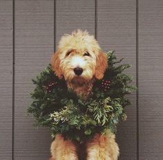 Somebody's feeling festive!