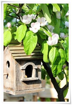 Spring tree flowering and bird house ready for a new family.