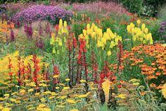 R.H.S. Garden Rosemoor.