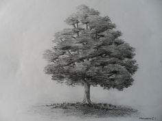 Como dibujar un árbol paso a paso, bien fácil. Bases para aprender a dib...