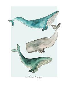 """Whales"" by Megan Gilbert Watercolour whales, digitised Whale Painting, Watercolor Whale, Painting & Drawing, Watercolor Paintings, Watercolour Tattoos, Fish Paintings, Blue Whale Drawing, Whale Illustration, Watercolor Art"