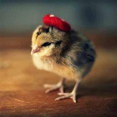 Little but Fashionable - Cute Animal Creative Photography Idea - WEENII.COM