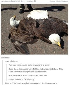 Ummm... you're aware they weren't fighting right? They were.... uh... *cough* mating
